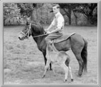 Exmoor Rider