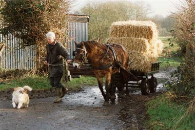 The Exmoor Pony is Hardworking