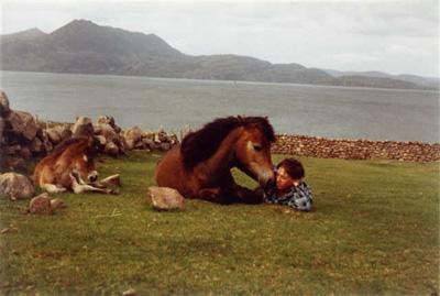 The Exmoor Pony is Loving